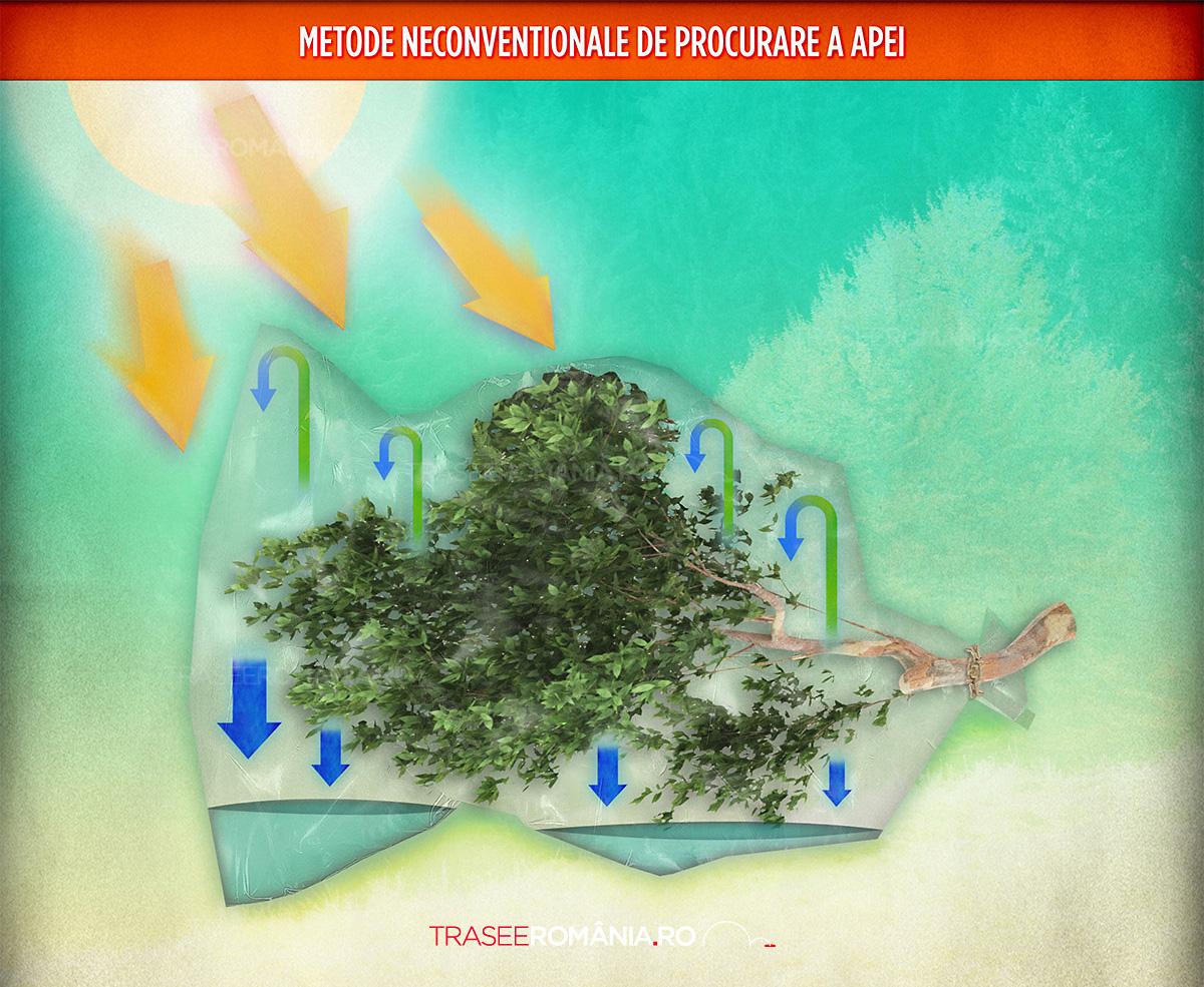 METODE DE PROCURARE A APEI - UNDE SI CUM GASIM APA IN NATURA DIN FRUNZE SI VEGETATIE
